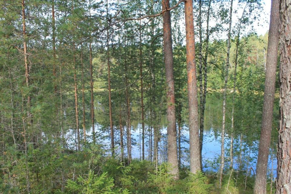 Hevonlinnan järvi