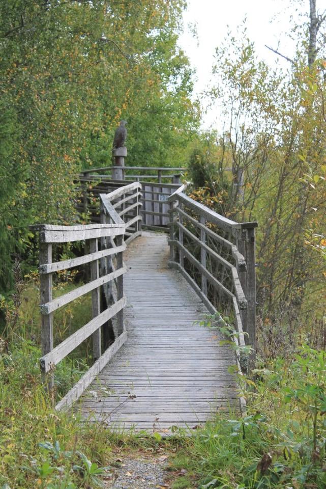 Otajärven esteetön lintulava
