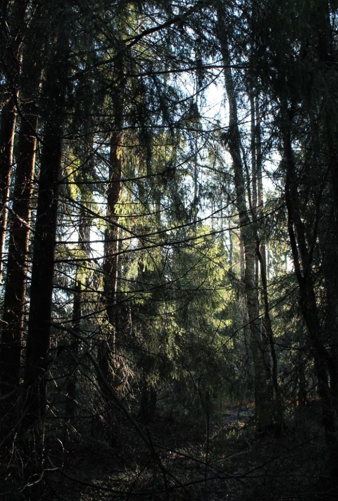 Kävelet yksin pimeässä metsässä