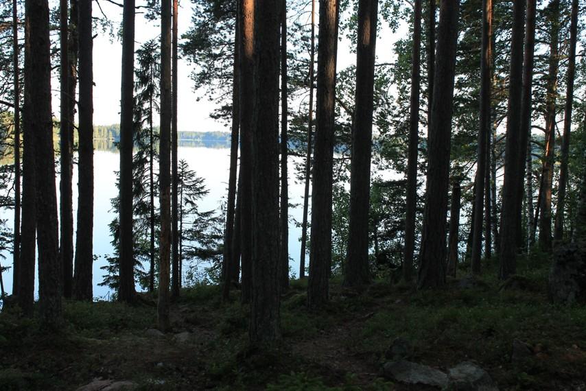 Järvi pilkottaa pimeän metsän takaa
