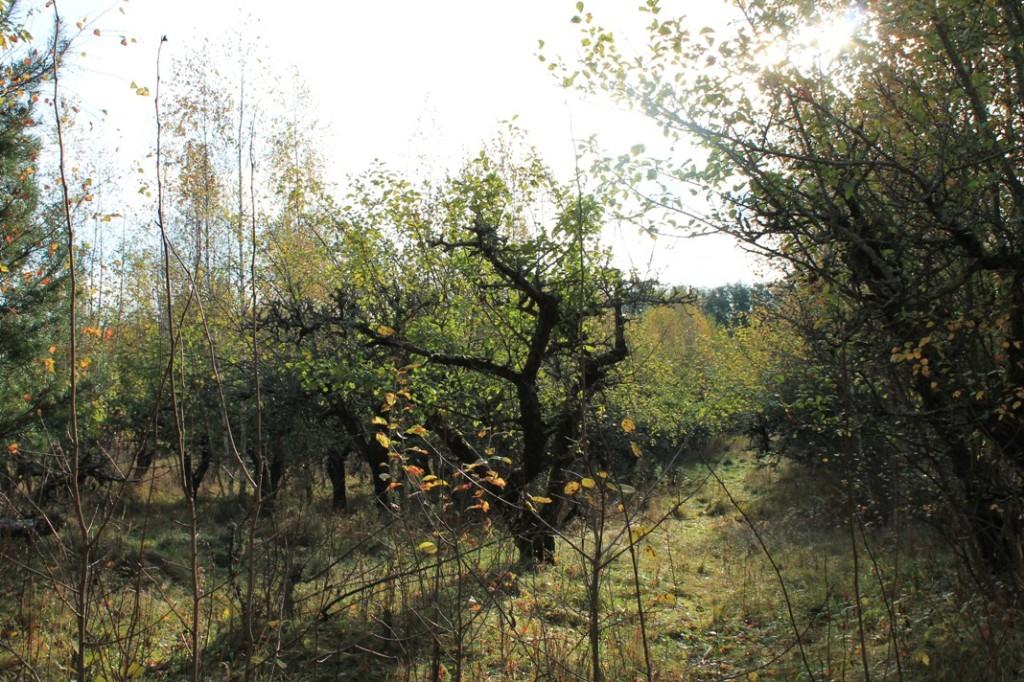 Hylätty omenatarha Raision Timalipolulla