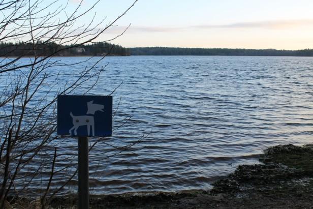 Littoistenjärven koirauimaranta