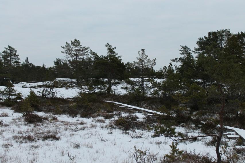 Pitkospuut Taivassalon Hakkenpään luontopolulla