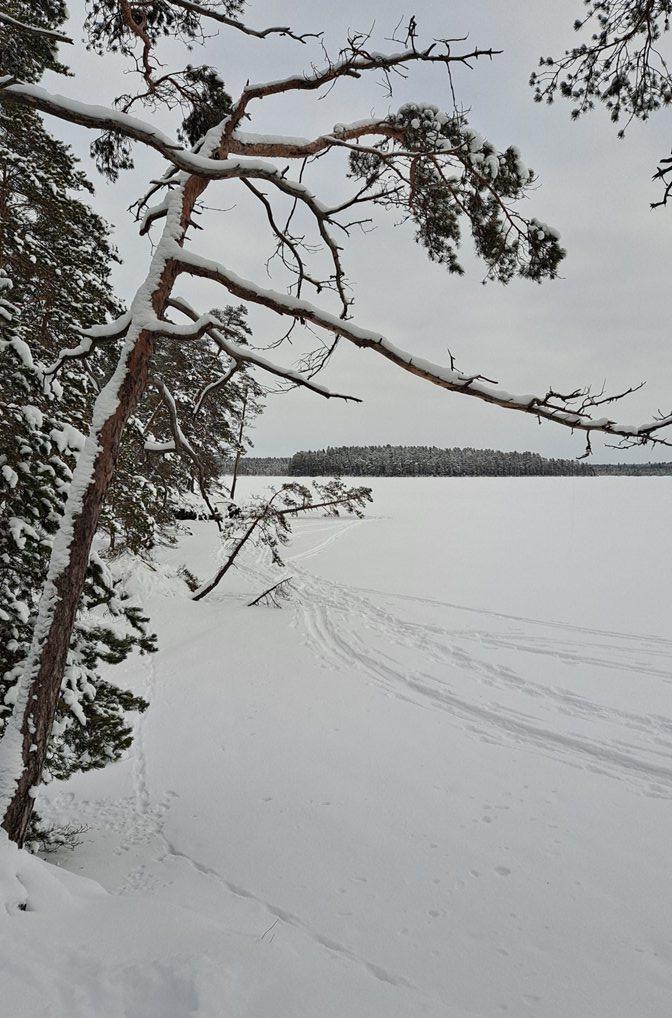 Talvinen Savojärvi Kurjenrahkan kansallispuistossa
