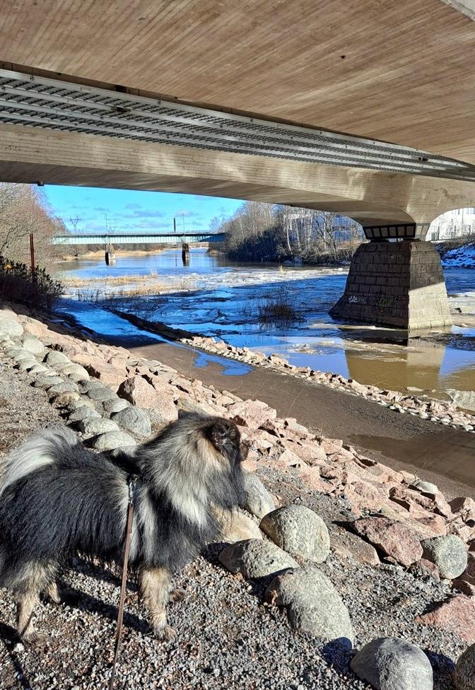 Aurajoen sillan alla