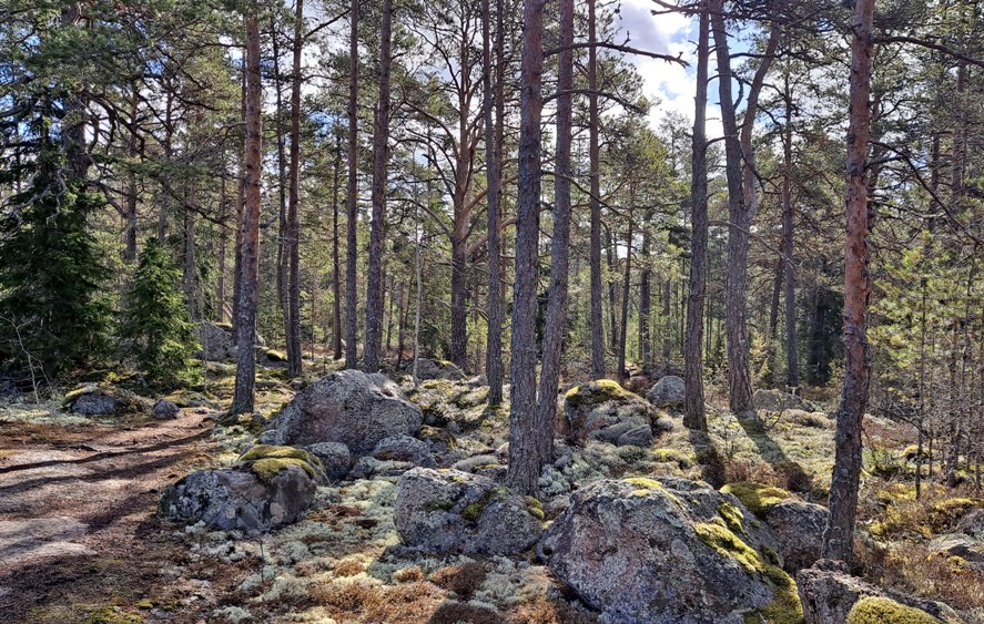 Matovuoren ja Ilvesvuoren luontopolku Laitilassa