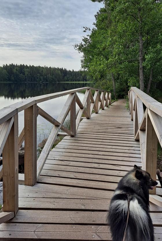 Kyynäränharjun silta Liesjärven kansallispuistossa