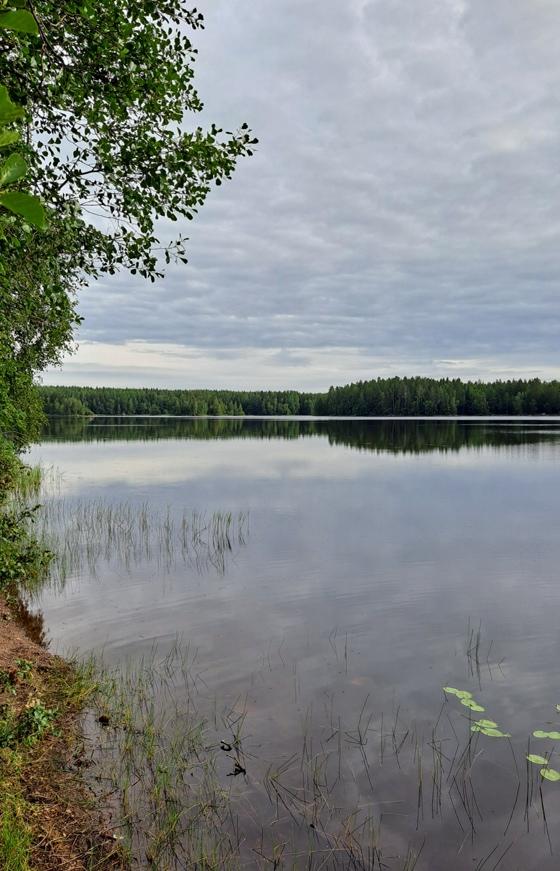 Kyynäränharju Liesjärven kansallispuistossa