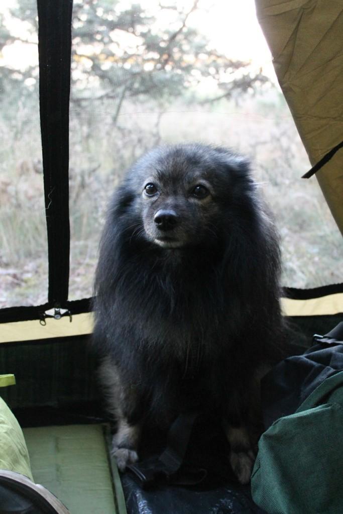 Mittelspitz Unto teltassa