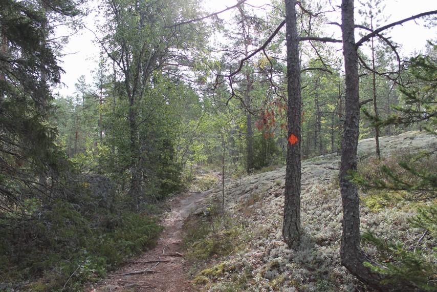 Hiunjärven luontopolku