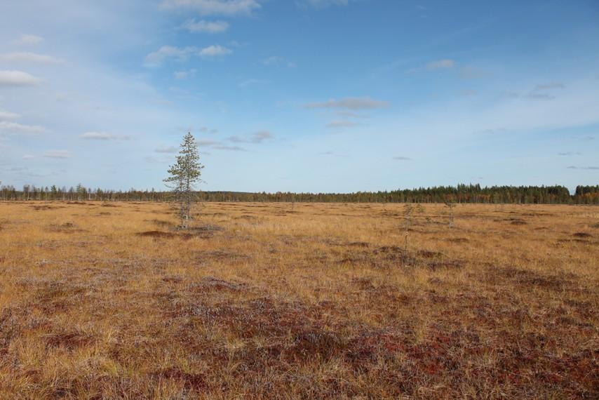 Pudasjärveläistä suomaisemaa Livon luontopolulla