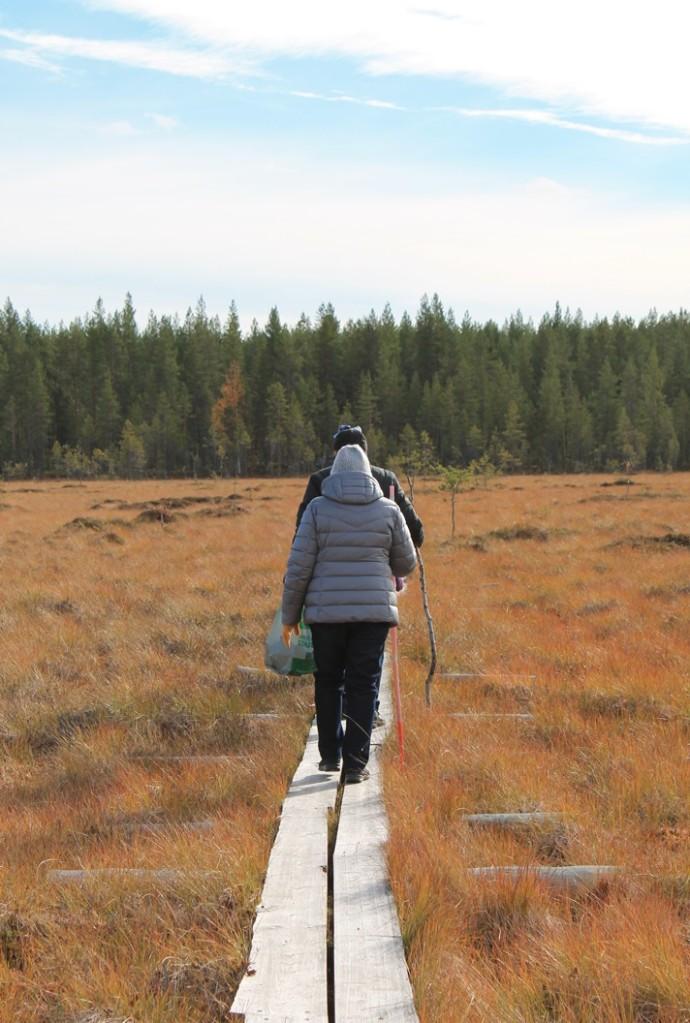 Luontopolku Vitikon laavulle Pudasjärven Livolla